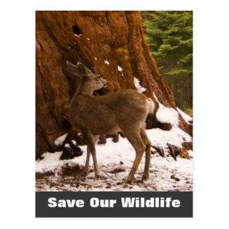 Mule Deer Save Our Wildlife Postcard