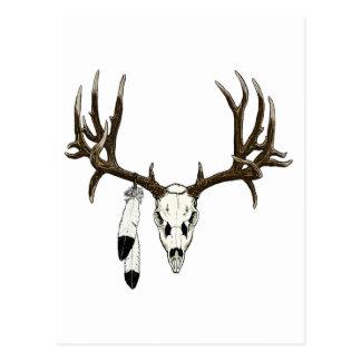 Mule deer skull eagle feather postcard