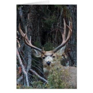 Mule deer spur buck card