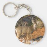 Mule Deer Staring Basic Round Button Keychain