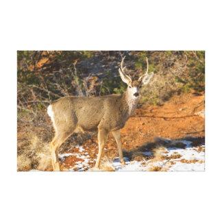 Mule Deer Staring Canvas Prints