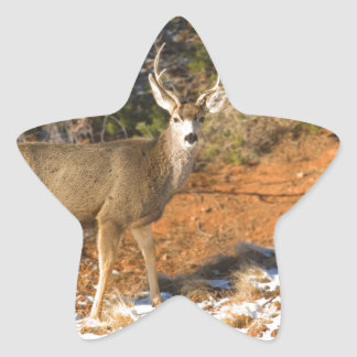 Mule Deer Staring Star Sticker