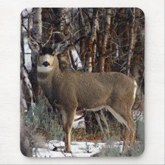 Mule deer wellsville mousepads