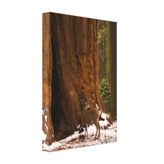 Mule Deer Wrapped Canvas Gallery Wrap Canvas