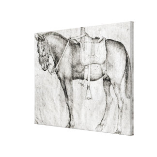 Mule, from the Vallardi Album Canvas Print