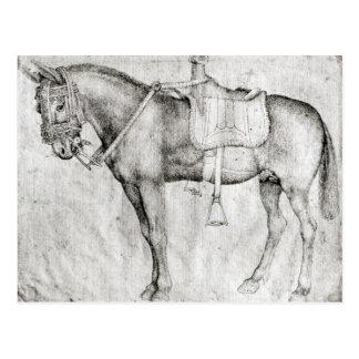 Mule, from the Vallardi Album Postcard