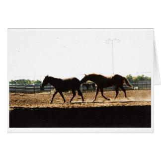 Mule & Horse Card