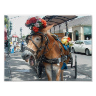 Mule ride print