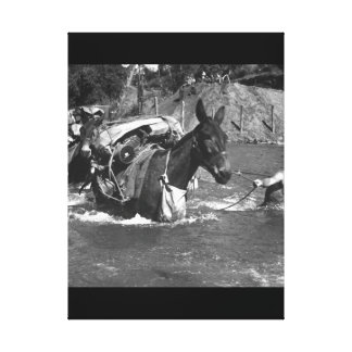 Mule skinners attached to 2nd Bn_War Image Canvas Print