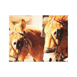 mule team canvas print