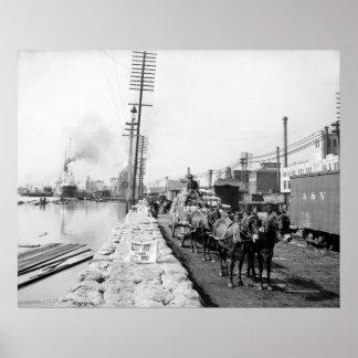 Mule Teams on the Levee, New Orleans: 1903 Posters