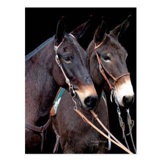 Mule Twosome Postcard