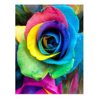 Mulit-Colored Rose by SnapDaddy, can Personalize! Postcard