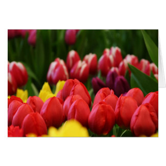 mulit colored tulips card