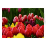 mulit colored tulips greeting card