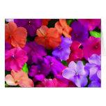 Multi Color Flowers Card - blank