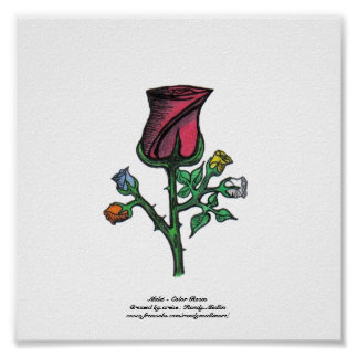 Multi - Color Roses...Print...