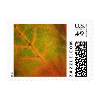 Multi-colored Autumn Leaf | Postage Stamps