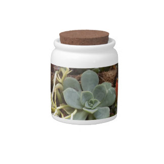 Multi-colored-Cacti Candy Jars
