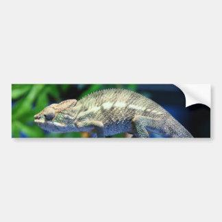 Multi-Colored Chameleon 2 Bumper Sticker