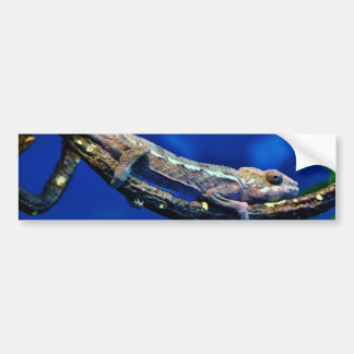 Multi-Colored Chameleon Bumper Sticker