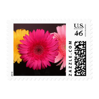 Multi colored gerber daisies stamp