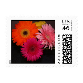 Multi colored gerber daisies postage stamps
