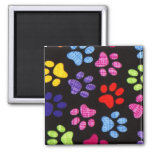 Multi-Colored Paws 2 Inch Square Magnet