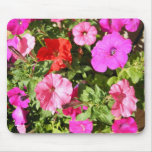 Multi-colored Petunias Mouse Pads