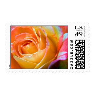 Multi-colored rose stamp