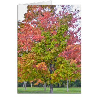 """MULTI-COLORED TREE IN FALL"" GREETING CARD"
