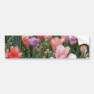 Multi Colored Tulips Bumper Stickers