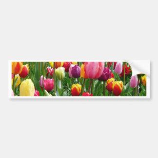Multi-colored Tulips Car Bumper Sticker