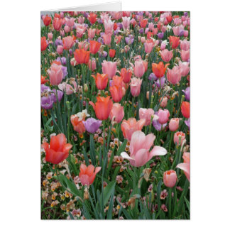 Multi Colored Tulips Greeting Cards