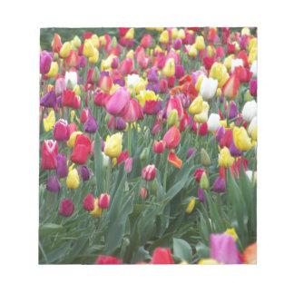 Multi-Colored Tulips in Field Scratch Pads