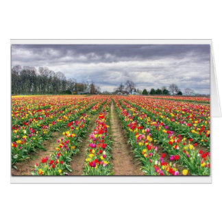 Multi colored tulips.jpg card