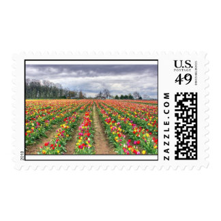 Multi colored tulips postage stamp