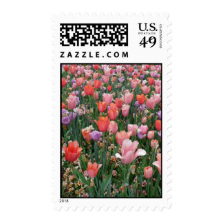 Multi Colored Tulips Postage Stamps