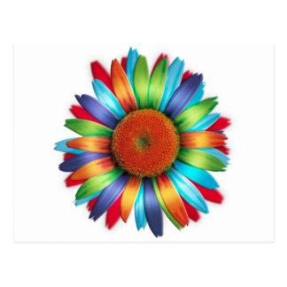 Multi-coloured Daisy Post Cards