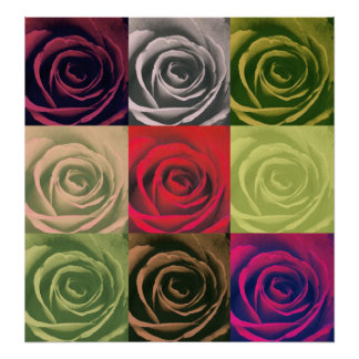 multi coloured rose Abstract Poster