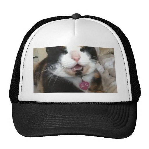 Multi Kitty.JPG Mesh Hat