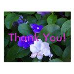 Multi Petunias Thank You Post Cards