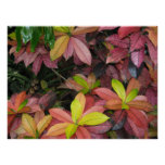Multicolor Leaves Posters