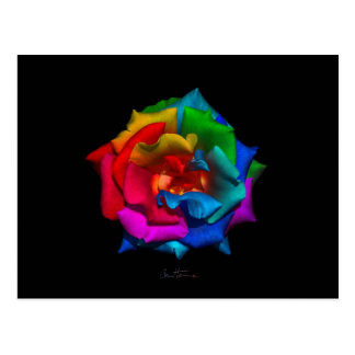 Multicolor Rose Post Cards
