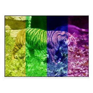 Multicolor Tiger Postcard