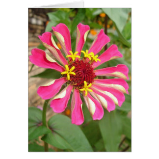 Multicolor Zinnia Card
