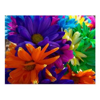 Multicolored Daises Postcard