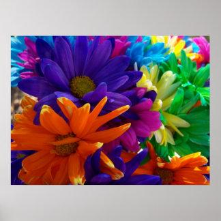 Multicolored Daises Poster