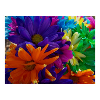Multicolored Daises Posters