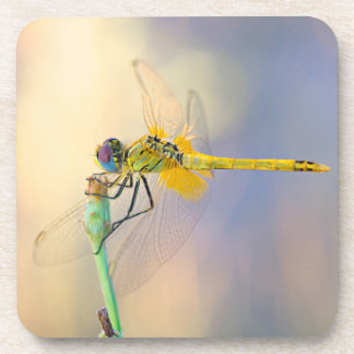 Multicolored dragonfly drink coaster